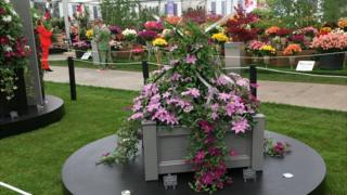 Guernsey Clematis stand at the RHS Chelsea Flower Show 2016