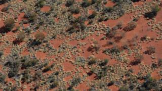 'Fairy Circles' form in Triodia spinifex grasses in remote Western Australia