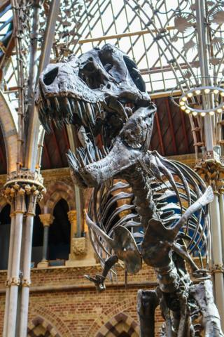 The Natural History Museum in Oxford