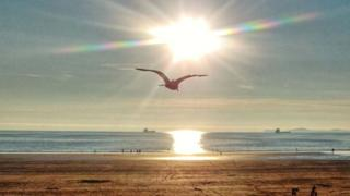 Seagull flying over Broadhaven North in Pembrokeshire