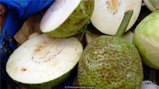 面包果,又称乌鲁果,是法属波利尼西亚岛民饮食和文化不可或缺的一部分 (Credit: Photofusion/Getty Images)