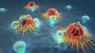 Células cancerosas sendo atacadas por linfócitos.