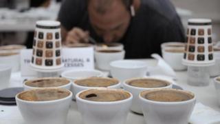"""أحد أعضاء لجنة التحكيم يفحص القهوة بمسابقة """"أفضل ما تجود به بنما"""""""