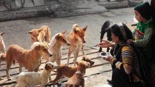 Mulher agachada gesticulando diante de cachorros na rua, enquanto seu filho aparece abraçado com ela