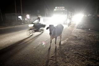 A cow amid traffic on a road in India
