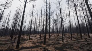 Burnt trees in NSW