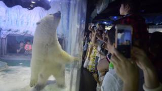 This picture taken on July 24, 2016 shows visitors taking photos of a polar bear