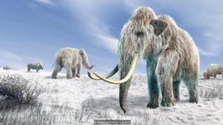 我们或许能在数年内通过大象杂交复活猛犸象(Credit: Science Photo Library)