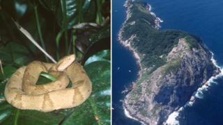 Jararaca-ilhoa e Ilha da Queimada-grande
