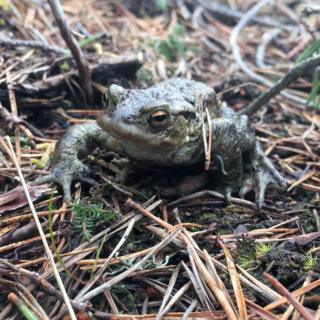 Jill Sutherland, from Dallas in Moray, found this creature as she walked in the woods