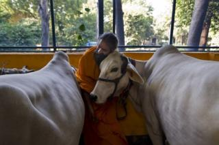 A Hindu temple priest caresses a cow. File photo
