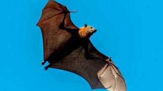Flying-bat.