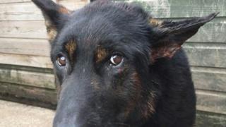 Police dog Bacca