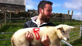 James Baylis and sheep