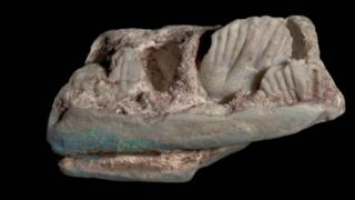The opalised partial lower jaw of a new plant-eating dinosaur, Weewarrasaurus pobeni,