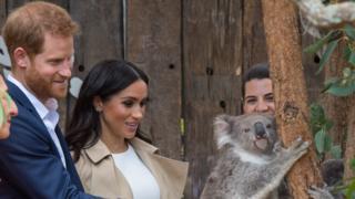 Prince Harry and Meghan with a koala bear