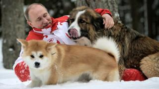Vladimir Putin playing in the snow with dogs, 2013