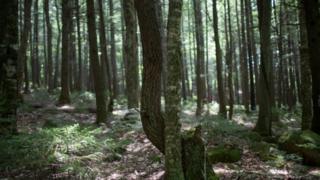 緬因州的森林