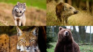 science collection of animals now extinct in Wales