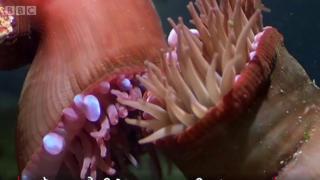 Underwater fight club