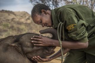 一家位于肯亚北部,由社区营运的大象保育中心。