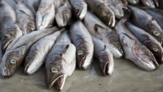 Stock of cod fish