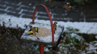 Birds feeding in snow in Warwickshire