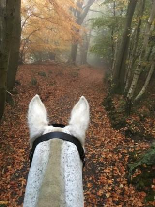 Woodland view from on a horse