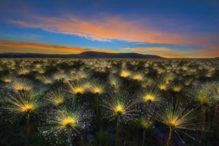 Flores luminicentes
