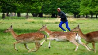 Olympic and World Champion long distance runner Mo Farah exercises near deer in Richmond Park, following the outbreak of the coronavirus disease (COVID-19), in London, Britain May 12, 2020. Picture taken May 12, 2020.