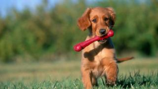 'Puppy talk' - why do we use it and do dogs respond?