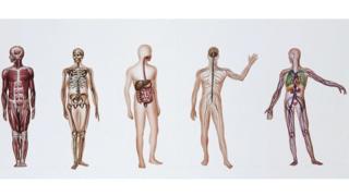 الأعضاء البشرية