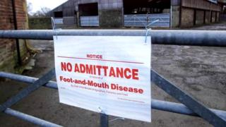 An image at a farm showing a sign blocking off because of foot and mouth infection