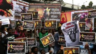 Chennai protest in support of jallikattu (21 January 2017)