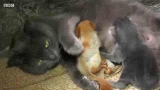 다람쥐의 고양이 엄마