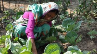 Woman gardening in Bangladesh