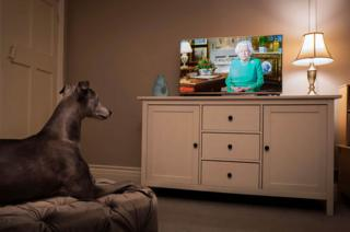 The photographer's pet whippet looks towards the television as Queen Elizabeth II addresses the nation