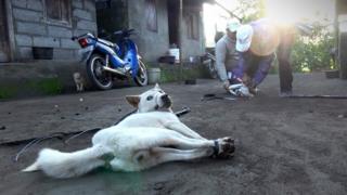 anjing di Bali
