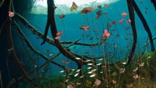 Lago com plantas e raízes
