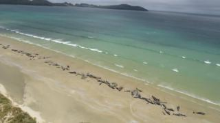 Stranded whales on a beach