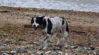 Dog on a shingle beach