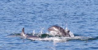 Dolphin and Porpoise