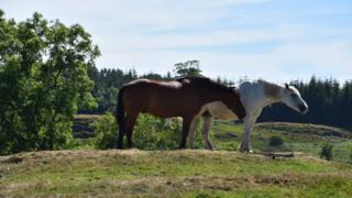 Horses in Kilmacolm