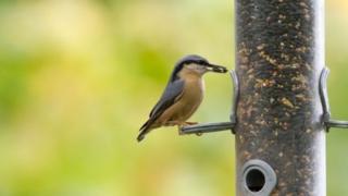 ظرف غذای پرندهها باید مرتب تمیز شود