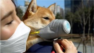 собака в масці