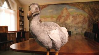 Display model of a dodo