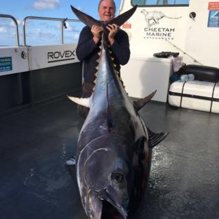 Giant tuna caught off Pembrokeshire