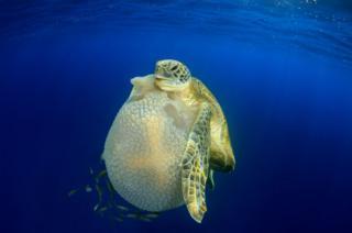 Turtle by Richard Carey