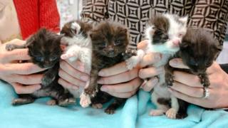 Rescued kittens in San Diego