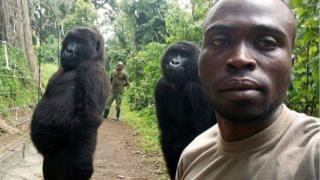 刚果维龙加国家公园的两只大猩猩摆姿势